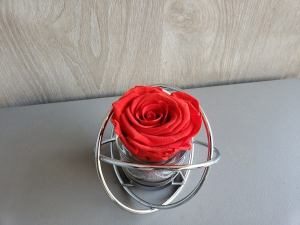 rose éternelle cerclée de metal