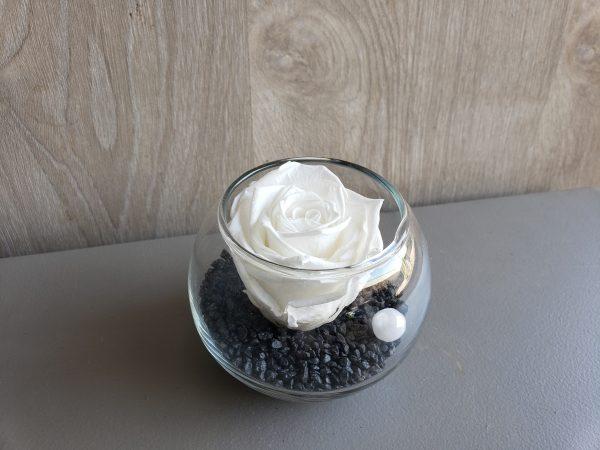 rose eternelle dans une boulle de verre