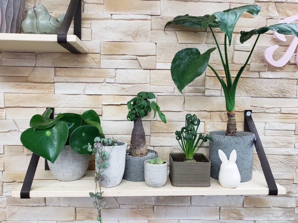 Les plantes de Marie Danède