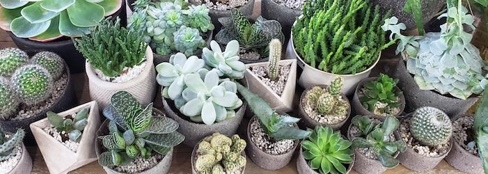 Les plantes grasses et cactus de Marie Danède
