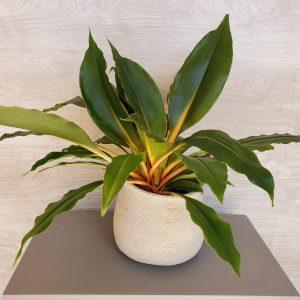 chlorophytum Marie Danède Art Floral et Cuiosités