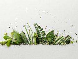 Les fiches plantes de Marie Danède