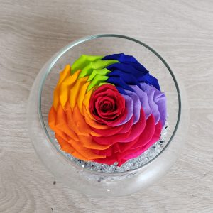Rose éternelle arlequin Marie Danède 1