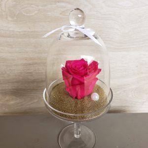 Rose éternelle dans sa cloche sur pied Marie Danède 1